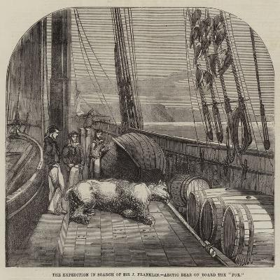 The Expedition in Search of Sir J Franklin, Arctic Bear on Board the Fox--Giclee Print