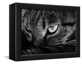 The Face Of A Cat In Black And White-anderm-Framed Stretched Canvas