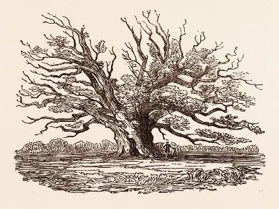 The Fairlop Oak, in Hainault Forest in the London Borough of Redbridge, Uk--Giclee Print