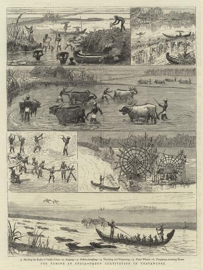 The Famine in India, Paddy Cultivation in Travancore--Giclee Print