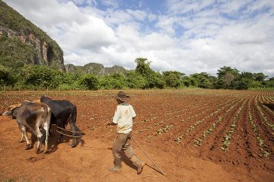 The Farmer in Vinales Valley, Cuba-Hakki Ceylan-Photographic Print