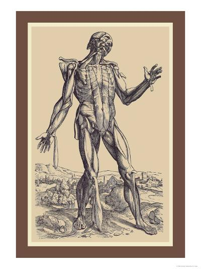 The Fifth Plate of the Muscles-Andreas Vesalius-Art Print