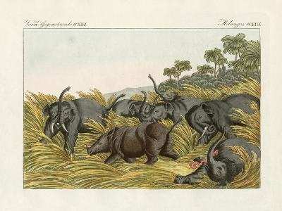 The Fight of the Rhinoceros with the Elefants--Giclee Print