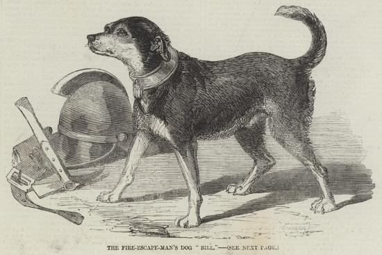 The Fire-Escape-Men's Dog Bill--Giclee Print