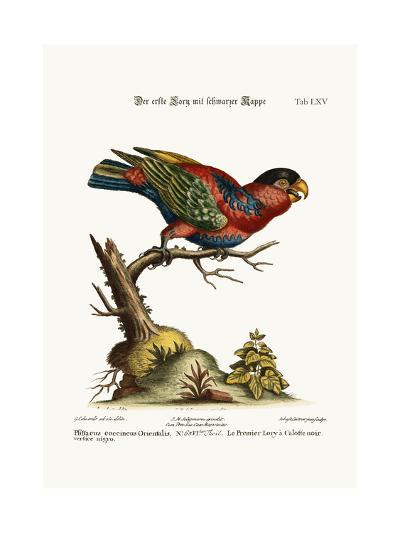 The First Black-Capped Lory, 1749-73-George Edwards-Giclee Print