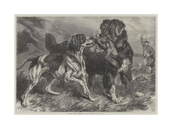 The First Grouse of the Season-Samuel John Carter-Giclee Print