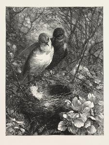 The First Nest, 1876, Bird, Birds, Spring, Nature