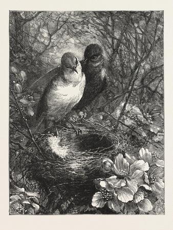 https://imgc.artprintimages.com/img/print/the-first-nest-1876-bird-birds-spring-nature_u-l-pvto8n0.jpg?artPerspective=n