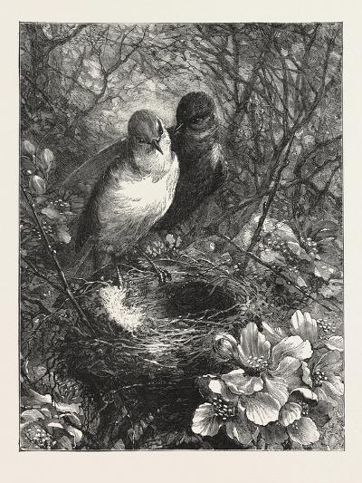 The First Nest, 1876, Bird, Birds, Spring, Nature--Giclee Print