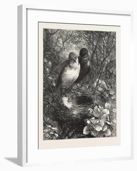 The First Nest, 1876, Bird, Birds, Spring, Nature--Framed Giclee Print