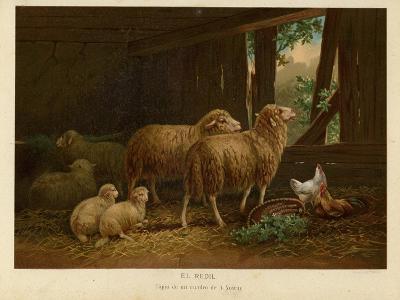 The Flock--Giclee Print