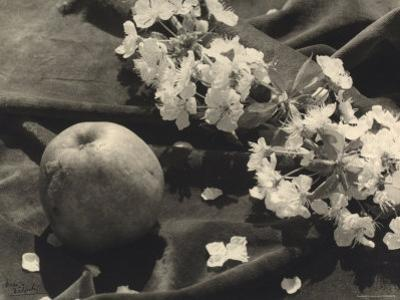 The Flower and the Fruit