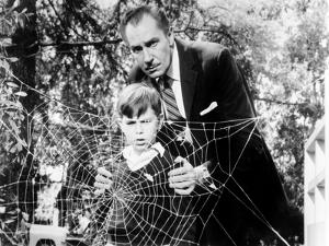 The Fly, Charles Herbert, Vincent Price, 1958, Spider Web