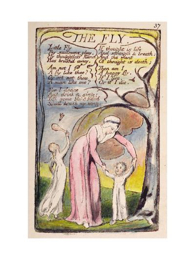 The Fly', Plate 37 from 'Songs of Innocence and of Experience' [Bentley 40] C.1789-94-William Blake-Giclee Print