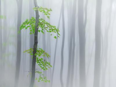 The Fog and Leaves-Michel Manzoni-Photographic Print