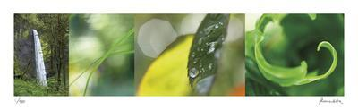 https://imgc.artprintimages.com/img/print/the-forest-1_u-l-f7tvaq0.jpg?p=0