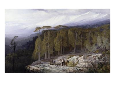 https://imgc.artprintimages.com/img/print/the-forest-of-valdoniello-corsica-1869_u-l-pg4nls0.jpg?p=0