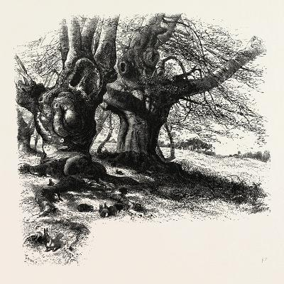 The Forest Scenery of Great Britain: Burnham Beeches, UK--Giclee Print