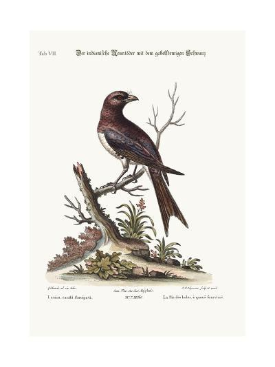 The Fork-Tailed Indian Butcher-Bird, 1749-73-George Edwards-Giclee Print