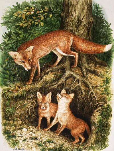 The Fox Family, Illustration from 'Once Upon a Time', 1971-John Chalkley-Giclee Print
