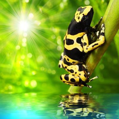 https://imgc.artprintimages.com/img/print/the-frog-dendrobates-leucomelas-in-a-rainforest_u-l-pn1ej60.jpg?p=0
