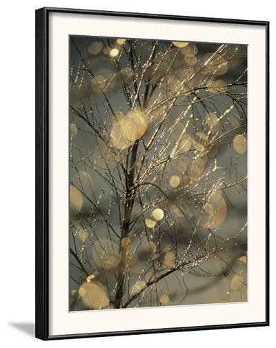 The Frozen Branches of a Small Birch Tree Sparkle in the Sunlight, Waynesboro, Pennsylvania-Raymond Gehman-Framed Photographic Print