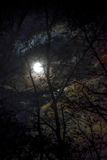 The Full Moon Creates Rainbows in the Clouds, Seen Through Silhouetted Tree Branches-Amy White and Al Petteway-Photographic Print