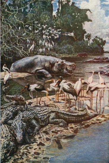 The Gambia River, as Described by Captain Jobson-Harry Hamilton Johnston-Giclee Print