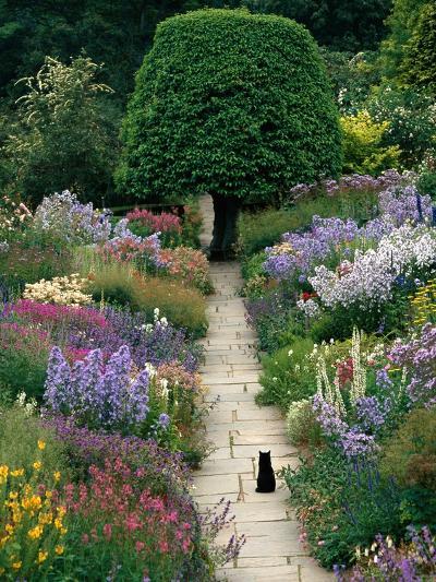 The Garden Cat-Greg Gawlowski-Photographic Print