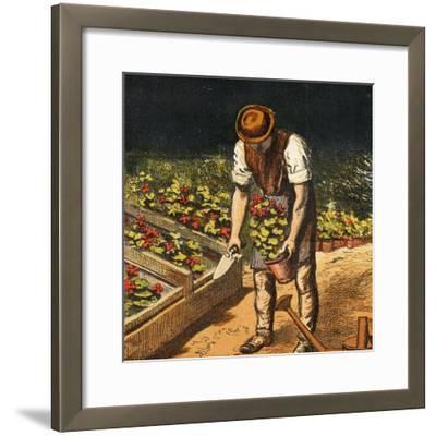 The Gardener, 1867