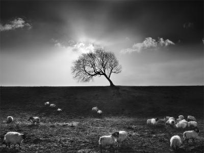 The Gathering-Martin Henson-Photographic Print