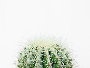 Barrel Cactus by The Gingham Owl