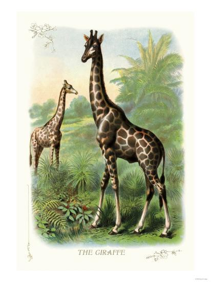 The Giraffe--Art Print