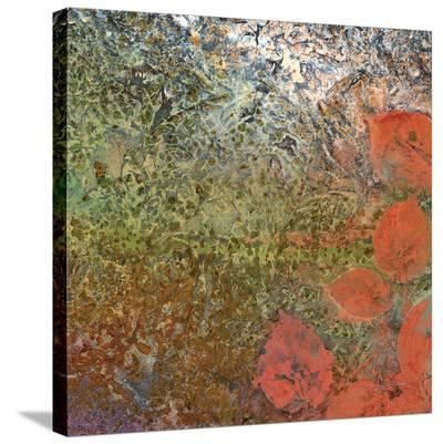 The Glades D-Jay Zinn-Stretched Canvas Print