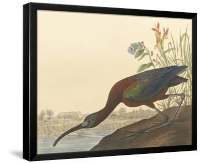 The Glossy Ibis-John James Audubon-Framed Premium Giclee Print