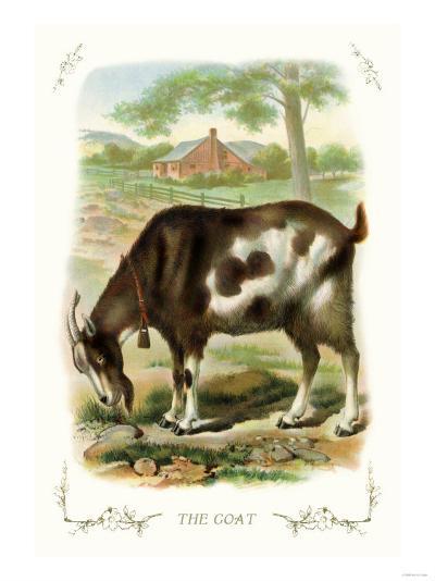 The Goat--Art Print