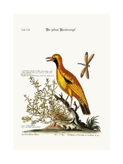 The Golden Bird of Paradise, 1749-73-George Edwards-Giclee Print