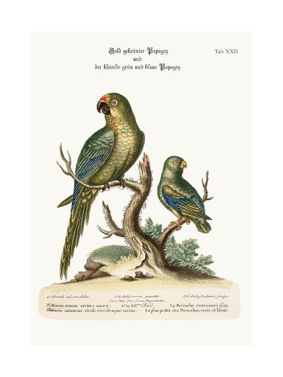 The Golden-Crowned Parrakeet and the Least Green and Blue Parrakeet, 1749-73-George Edwards-Giclee Print