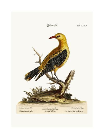The Golden Thrush, 1749-73-George Edwards-Giclee Print