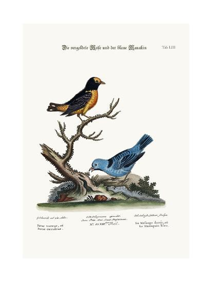 The Golden Tit-Mouse, and the Blue Manakin, 1749-73-George Edwards-Giclee Print