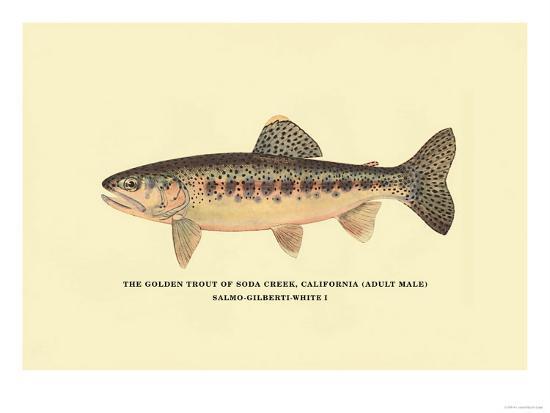 The Golden Trout of Soda Creek-H^h^ Leonard-Art Print