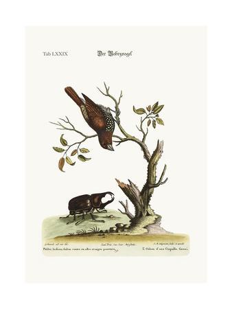 https://imgc.artprintimages.com/img/print/the-gowry-bird-1749-73_u-l-pulcbc0.jpg?p=0