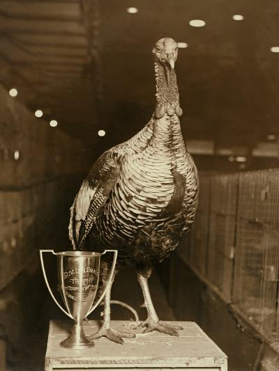 The Grand Champion Gobbler of the World--Photographic Print