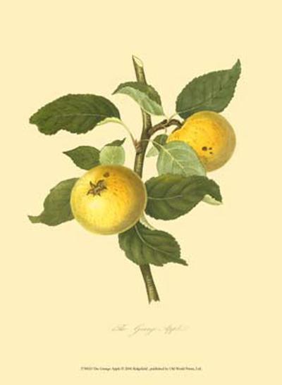 The Grange Apple--Art Print