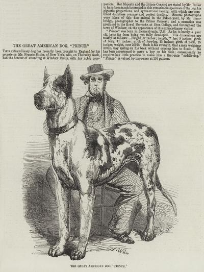 The Great American Dog Prince-Harrison William Weir-Giclee Print