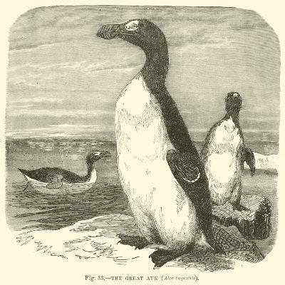 The Great Auk, Alca Impennis--Giclee Print