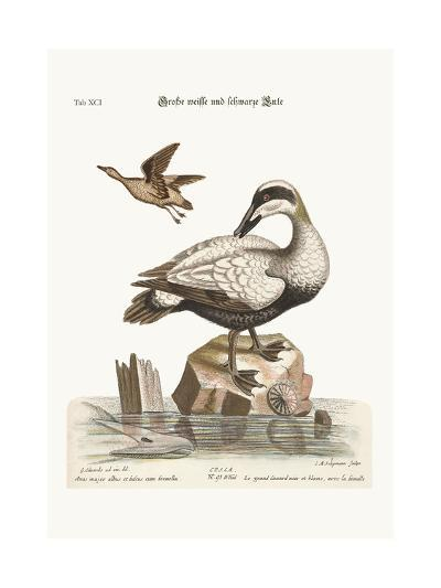The Great Black and White Duck, 1749-73-George Edwards-Giclee Print