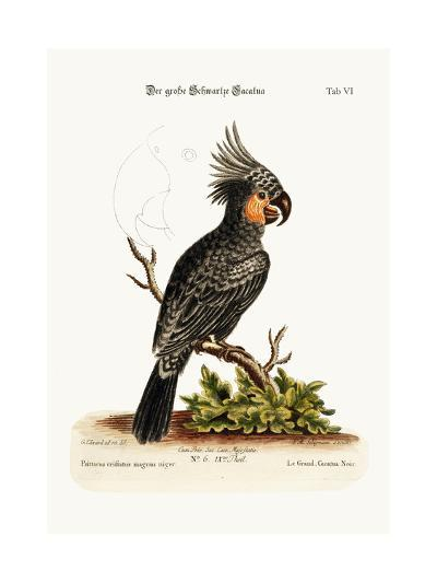 The Great Black Cockatoo, 1749-73-George Edwards-Giclee Print