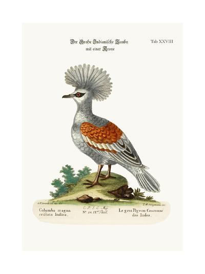 The Great Crowned Indian Pigeon, 1749-73-George Edwards-Giclee Print