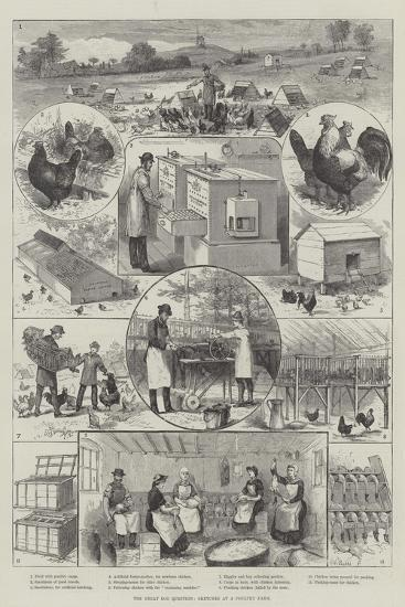 The Great Egg Question, Sketches at a Poultry Farm--Giclee Print